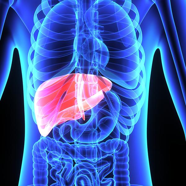 NAD biosynthesis promotes liver regeneration